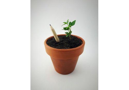 """фото 3 - Набор карандашей Brinjal """"Eco Stick"""" цветные 6 шт"""