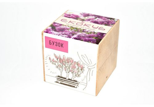 """фото 1 - Набор для выращивания Екокуб """"Сирень"""""""