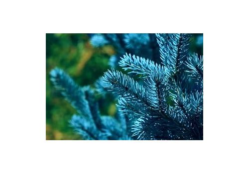 """фото 8 - Набор для выращивания Екокуб """"Голубая ель"""""""
